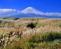 大野原のススキと富士山