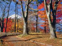 紅葉の山中湖畔と富士山 11076002157| 写真素材・ストックフォト・画像・イラスト素材|アマナイメージズ