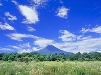 花の都公園に咲くヒメジョオンと富士山 11076002205| 写真素材・ストックフォト・画像・イラスト素材|アマナイメージズ