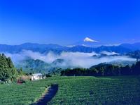 清水吉原から雲海と富士山 11076002215| 写真素材・ストックフォト・画像・イラスト素材|アマナイメージズ