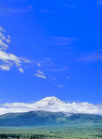 新緑の富士山と青空