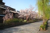 祇園白川の桜と白川南通