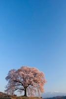 王仁塚(わにづか)の桜と八ケ岳