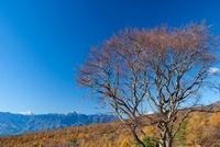 清里美し森より紅葉と南アルプス 11076002956| 写真素材・ストックフォト・画像・イラスト素材|アマナイメージズ