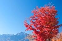 紅葉の八ヶ岳高原より南アルプス 11076002978| 写真素材・ストックフォト・画像・イラスト素材|アマナイメージズ