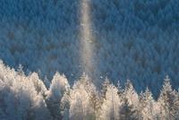 霧ヶ峰高原のダイヤモンドダストと霧氷 11076003010| 写真素材・ストックフォト・画像・イラスト素材|アマナイメージズ