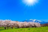 八ヶ岳高原 蕪(かぶら)桜並木と南アルプス、太陽光