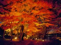 山中湖紅葉のライトアップ