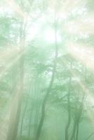 霧の中の森と光芒