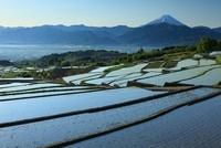 棚田より甲府盆地と富士山 11076004096| 写真素材・ストックフォト・画像・イラスト素材|アマナイメージズ