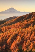 水ヶ森林道より朝日差す唐松紅葉と富士山