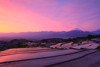 棚田より甲府盆地と朝焼けの富士山 11076004232| 写真素材・ストックフォト・画像・イラスト素材|アマナイメージズ