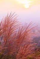 若草山のススキと夕日 11076004240| 写真素材・ストックフォト・画像・イラスト素材|アマナイメージズ