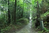 山の辺の道 新緑