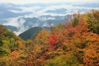 大台ケ原 紅葉と雲海 11076004320| 写真素材・ストックフォト・画像・イラスト素材|アマナイメージズ