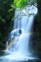 桑の木滝新緑と虹