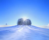 雪原のカラマツ林と太陽