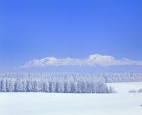 カラマツ林の樹氷と十勝岳連峰 11076005167| 写真素材・ストックフォト・画像・イラスト素材|アマナイメージズ