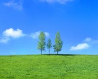 親子の木と牧草地 11076005242| 写真素材・ストックフォト・画像・イラスト素材|アマナイメージズ