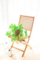 ポトスと椅子 じょうろ