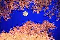 サクラのライトアップに月