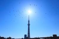 東京スカイツリーと太陽 鳥