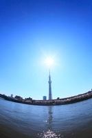 東京スカイツリーと太陽