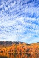 八千穂高原の紅葉とうろこ雲