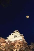 会津若松城ライトアップとサクラ 月