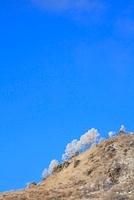 車山高原の霧氷 11076006608| 写真素材・ストックフォト・画像・イラスト素材|アマナイメージズ