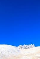 車山高原の霧氷 11076006615| 写真素材・ストックフォト・画像・イラスト素材|アマナイメージズ