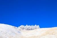 車山高原の霧氷 11076006617| 写真素材・ストックフォト・画像・イラスト素材|アマナイメージズ