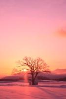 野辺山高原 雪原に1本の木と朝日
