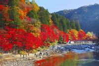 香嵐渓 紅葉と待月橋
