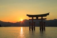 宮島 厳島神社の大鳥居と夕日 11076006957| 写真素材・ストックフォト・画像・イラスト素材|アマナイメージズ