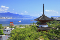 宮島 多宝塔と厳島神社の大鳥居