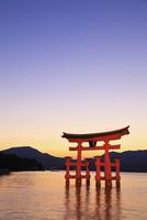 宮島 厳島神社の大鳥居と夕景 11076007144| 写真素材・ストックフォト・画像・イラスト素材|アマナイメージズ