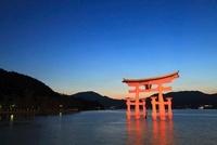 宮島 厳島神社の大鳥居のライトアップ