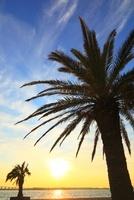 浜名湖・弁天島 ヤシの木と夕日 11076007588| 写真素材・ストックフォト・画像・イラスト素材|アマナイメージズ