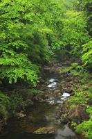 新緑の三段峡