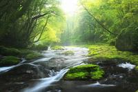 菊池渓谷 広河原の光芒