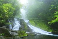 菊池渓谷 四十三万滝の光芒
