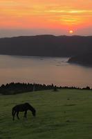 都井岬 岬馬と夕焼け