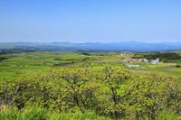 瀬の本高原の新緑