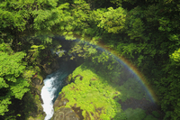 菊池渓谷の新緑と虹