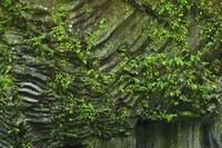 高千穂峡 柱状節理の断崖