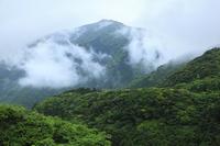 屋久島 新緑の山並みと雲海