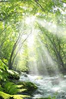 新緑の奥入瀬渓流と光芒