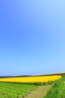 ナノハナ畑と青空