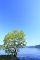新緑の樹と十和田湖 遠景に八甲田山